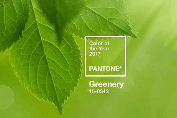 Pantone 草木绿色 2017